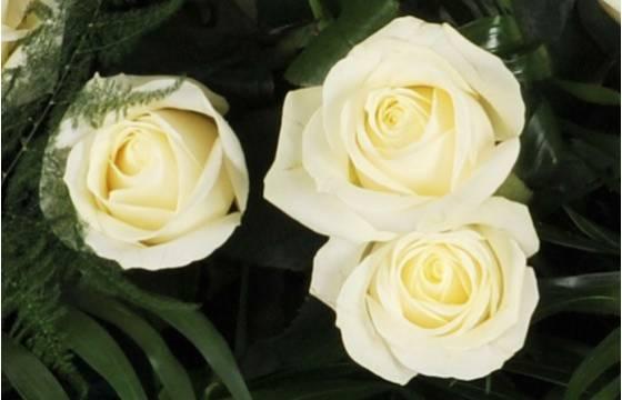 """Fleurs en Deuil   vue sur trois roses blanches de la Raquette de roses blanches """"L'Ange Gardien"""""""