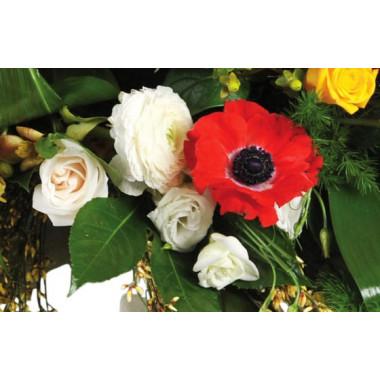 """Fleurs en Deuil   image de renoncules et anémones de la Raquettes fleurs colorées de deuil """"Comète"""""""