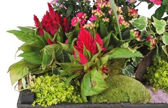 Fleurs en Deuil  vue sur un ensemble floral de la Composition de plantes de deuil Le Jardin d'Olympe