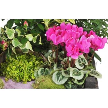 Fleurs en Deuil  vue sur un kalenkoé de la Composition de plantes de deuil Le Jardin d'Olympe