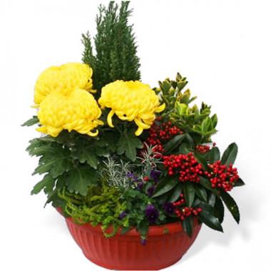 Fleurs en Deuil |image de la Coupe de plantes Jaune et Rouge pour cimetière
