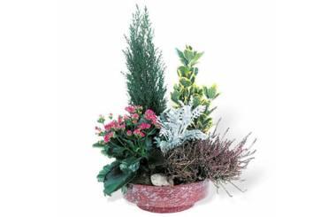 Fleurs en Deuil | Coupe de plantes vertes & fleuries Adieu Eternel