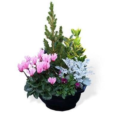 Fleurs en Deuil | Image de la Coupe plantes vertes & fleuries deuil