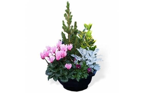 Fleurs en Deuil   Image de la Coupe plantes vertes & fleuries deuil