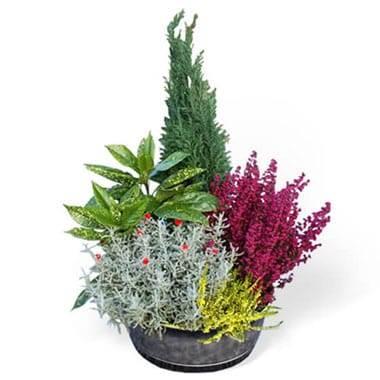 Fleurs en Deuil | image de la Coupe de plantes vertes & fleuries colorées