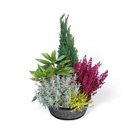 Fleurs en Deuil   image de la Coupe de plantes vertes & fleuries colorées