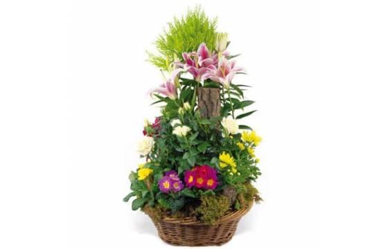 """Fleurs en Deuil   image de la Coupe de plantes vertes & fleuries """"Symphonie"""""""