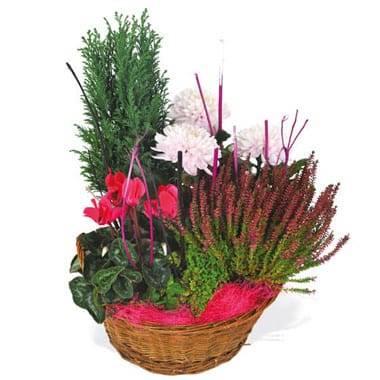 Fleurs en Deuil | image de la composition de plantes rouge et rose Le Jardin des Anges