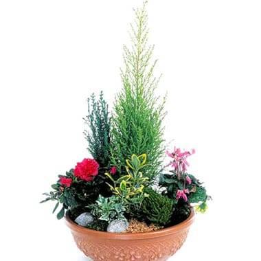 Fleurs en Deuil | image de la coupe de plantes fuchsia & rouge Jardin d'Eden