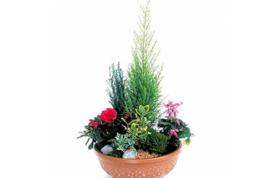 Fleurs en Deuil   image de la coupe de plantes fuchsia & rouge Jardin d'Eden