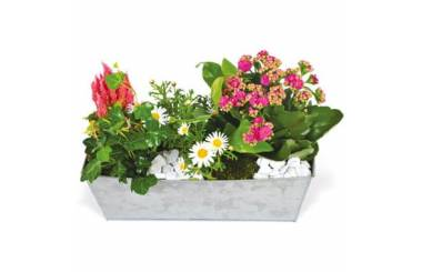 Fleurs en Deuil | image de la jardinière de plantes roses & blanches Calypso