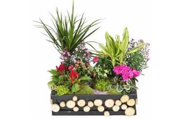 Fleurs en Deuil   image de la Composition de plantes de deuil Le Jardin d'Olympe