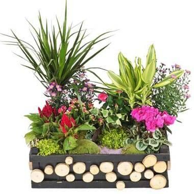 Fleurs en Deuil | image de la Composition de plantes de deuil Le Jardin d'Olympe