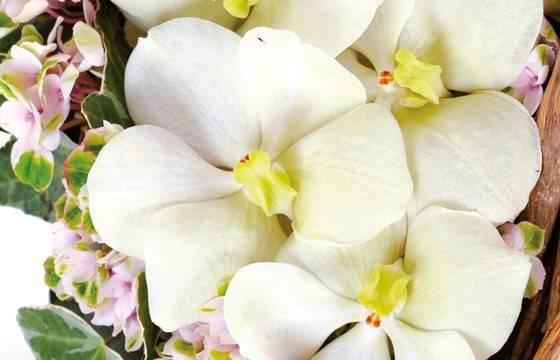 Fleurs en Deuil | zoom sur un fleuron d'orchidée vanda du coeur en fleurs Douceur