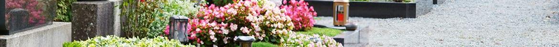 la livraison des fleurs